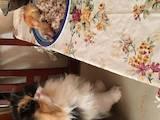 Пошуки, знахідки Кішки, Фото
