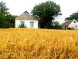 Дома, хозяйства Киевская область, цена 20000 Грн., Фото