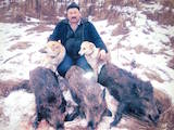 Собаки, щенки Западно-Сибирская лайка, цена 2900 Грн., Фото