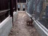 Животные Экзотические животные, цена 1000 Грн., Фото