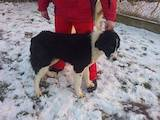 Собаки, щенята Невідома порода, ціна 1000 Грн., Фото