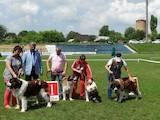 Собаки, щенята Московська сторожова, ціна 5000 Грн., Фото