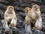 Животные Экзотические животные, цена 10000 Грн., Фото