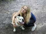 Собаки, щенята Англійський бульдог, ціна 9580 Грн., Фото