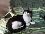 Кошки, котята Беспородная, цена 50 Грн., Фото