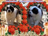 Собаки, щенки Московская сторожевая, цена 5500 Грн., Фото