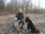 Собаки, щенята Російсько-Європейська лайка, ціна 9000 Грн., Фото