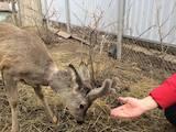 Животные Экзотические животные, цена 25000 Грн., Фото