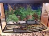 Рыбки, аквариумы Аквариумы и оборудование, цена 2100 Грн., Фото