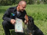 Собаки, щенята Російський спаніель, ціна 2500 Грн., Фото