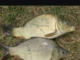 Рибки, акваріуми Рибки, ціна 40 Грн., Фото