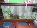 Рыбки, аквариумы Аквариумы и оборудование, цена 2200 Грн., Фото
