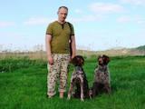 Собаки, щенята Німецька жорсткошерста лягава, ціна 2500 Грн., Фото