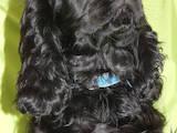 Собаки, щенята Англійський коккер, ціна 6500 Грн., Фото