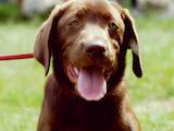 Собаки, щенки Занятия, тренировки, цена 150 Грн., Фото