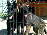 Собаки, щенки Восточно-Европейская овчарка, цена 10000 Грн., Фото