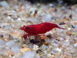 Рыбки, аквариумы Рыбки, цена 10 Грн., Фото