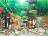Рыбки, аквариумы Аквариумы и оборудование, цена 700 Грн., Фото