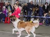 Собаки, щенята Московська сторожова, ціна 1 Грн., Фото
