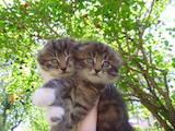 Кошки, котята Неизвестная порода, цена 500 Грн., Фото