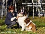 Собаки, щенята Московська сторожова, ціна 8000 Грн., Фото