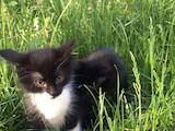Кошки, котята Беспородная, цена 0 Грн., Фото