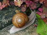 Животные Экзотические животные, цена 45 Грн., Фото