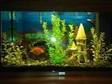 Рибки, акваріуми Акваріуми і устаткування, ціна 3000 Грн., Фото