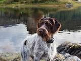 Собаки, щенки Разное, цена 3500 Грн., Фото