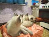 Тварини Різне, ціна 400 Грн., Фото
