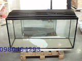Рибки, акваріуми Акваріуми і устаткування, ціна 1030 Грн., Фото