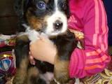 Собаки, щенки Беспородная, цена 2500 Грн., Фото