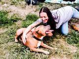 Собаки, щенки Американский стаффордширский терьер, цена 0.01 Грн., Фото