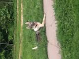 Собаки, щенки Западно-Сибирская лайка, цена 7500 Грн., Фото
