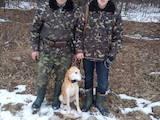 Собаки, щенки Эстонская гончая, цена 2600 Грн., Фото