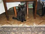 Кошки, котята Неизвестная порода, цена 12 Грн., Фото