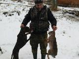 Собаки, щенки Немецкая гладкошерстная легавая, цена 25000 Грн., Фото