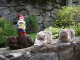 Кошки, котята Шотландская вислоухая, цена 1400 Грн., Фото
