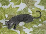 Кішки, кошенята Корніш-рекс, ціна 5000 Грн., Фото