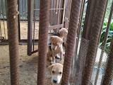Собаки, щенки Неизвестная порода, цена 800 Грн., Фото