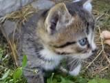 Кошки, котята Беспородная, цена 2 Грн., Фото