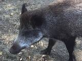 Животные Разное, цена 7500 Грн., Фото