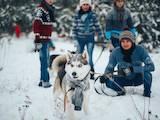 Собаки, щенята Сибірський хаськи, ціна 5500 Грн., Фото