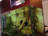 Рыбки, аквариумы Аквариумы и оборудование, цена 27000 Грн., Фото