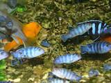 Рибки, акваріуми Рибки, ціна 10 Грн., Фото