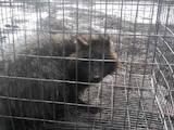 Животные Экзотические животные, цена 100 Грн., Фото