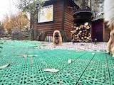 Собаки, щенки Чау-чау, цена 11500 Грн., Фото