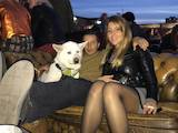 Собаки, щенки Акита-ину, цена 2500 Грн., Фото