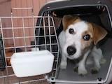 Тваринництво Послуги ветеринарів і медикаменти, Фото