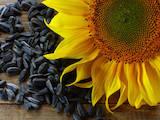 Сельское хозяйство Овощеводство, садоводство, Фото